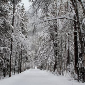 Winter Deciduous Forest Cold Damage