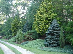 Privacy screen windbreak plants and trees