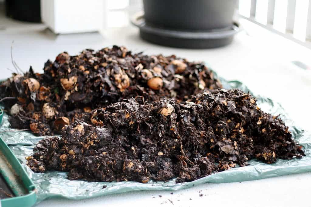 organic compost humus fungi bacteria protozoa
