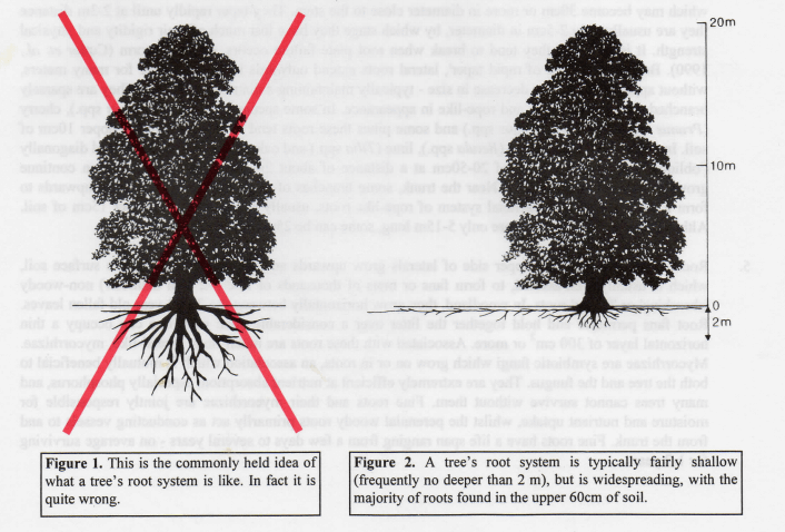 tree root system depiction