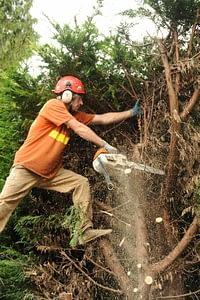 Arborist cutting trees