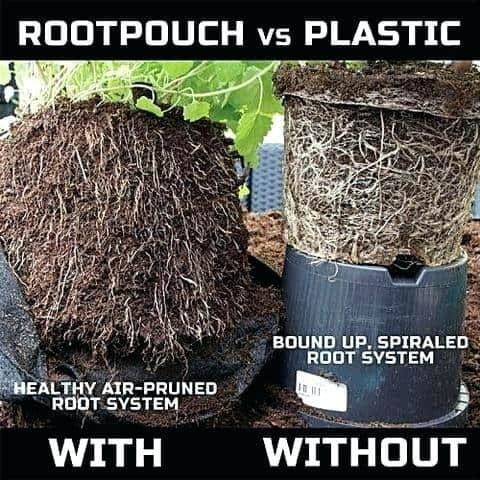 Root pouch vs plastic pots