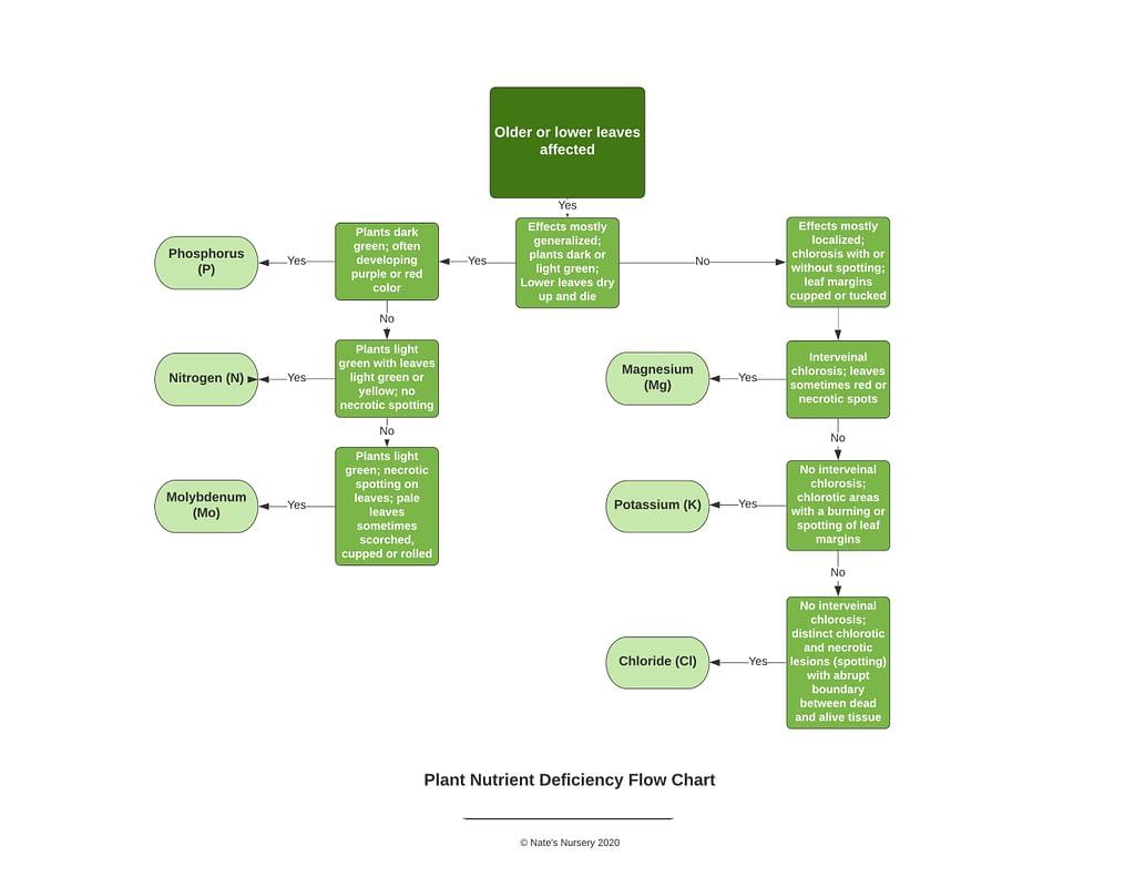 plant nutrient deficiency flow chart