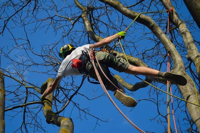 Arborist Climbing Tree with gear
